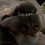犬のいびきってこんなに人間ぽかったっけ…?