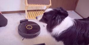 「TRIFO」ペット専用自動掃除機がすごい!らしい
