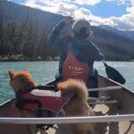 カナダ住みの柴犬さん、カヌー体験を満喫。