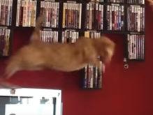 猫さんの華麗なるジャンプ失敗集