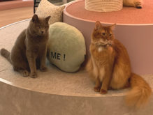 【猫カフェ】cat cafe MEOW(ミャオ)|短時間利用可能なオシャレ空間!