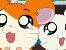 【アニメ】とっとこハム太郎の仲間たちをはハムスターの種類で言うと何?